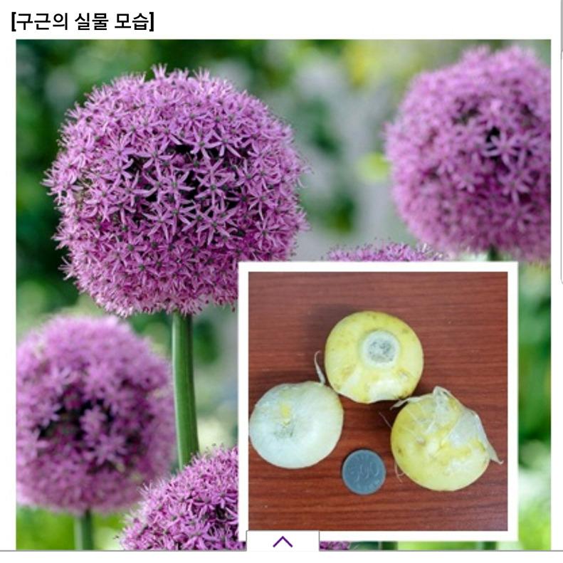 [꾸미기]Screenshot_20181104-210537_모야모.jpg